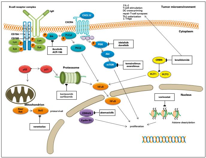 MCL的治疗靶点图.png