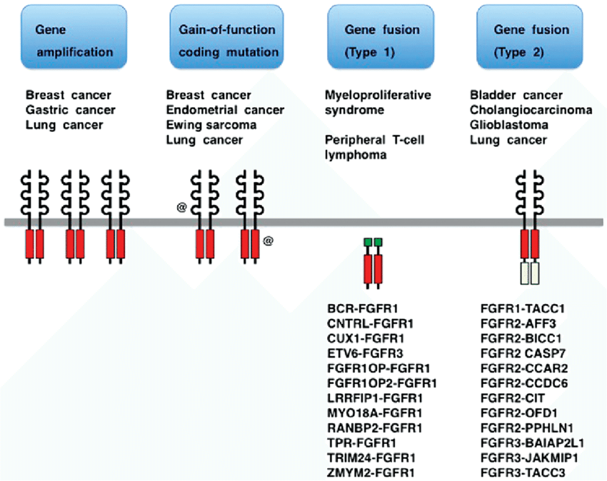 Fibroblast-growth-factor-receptor-FGFR-alterations-in-human-cancer-FGFR-genes-are.png