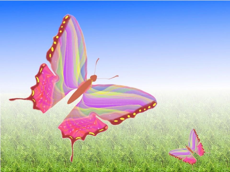 butterfly-15865_960_720[1]_副本.jpg